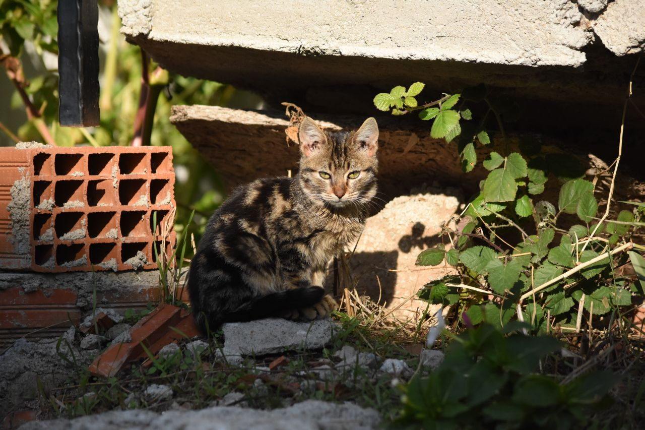 Cats of Burhaniye by Sevgingo
