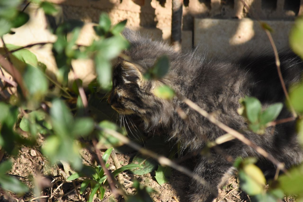Cats of Burhaniye by Sevgingo